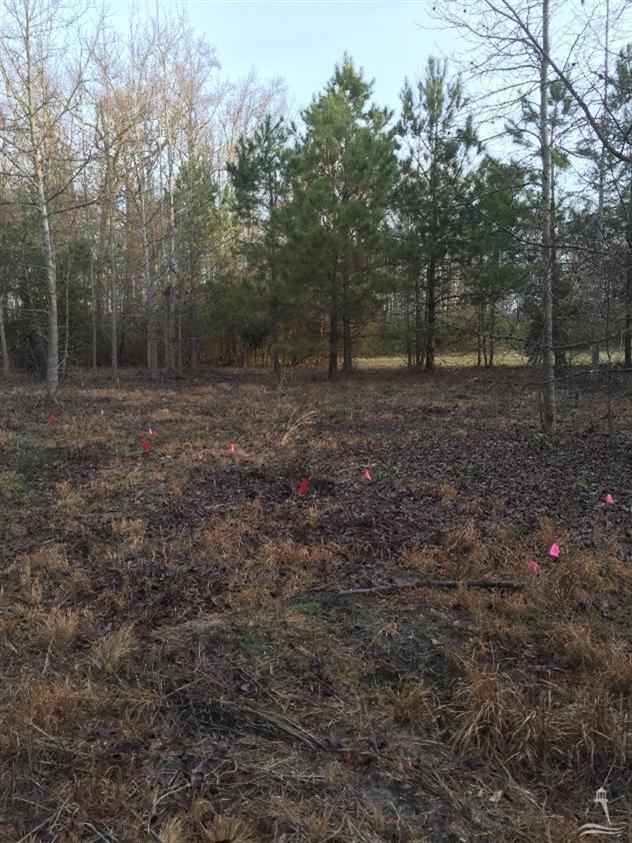 Carolina Plantations Real Estate - MLS Number: 100149718
