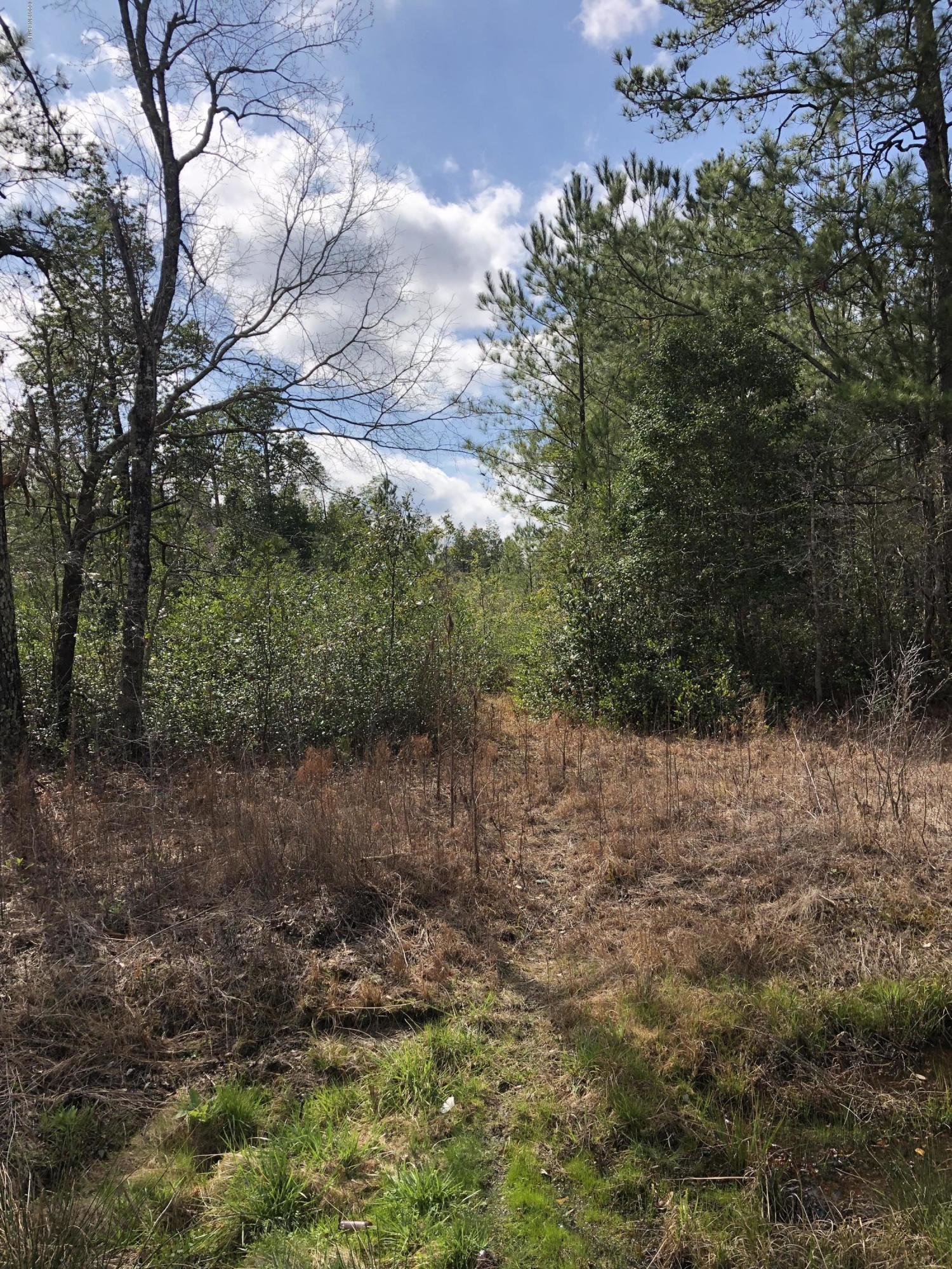 49 Ac Blue Banks Loop Road, Southport, North Carolina 28461, ,Undeveloped,For sale,Blue Banks Loop,100153660