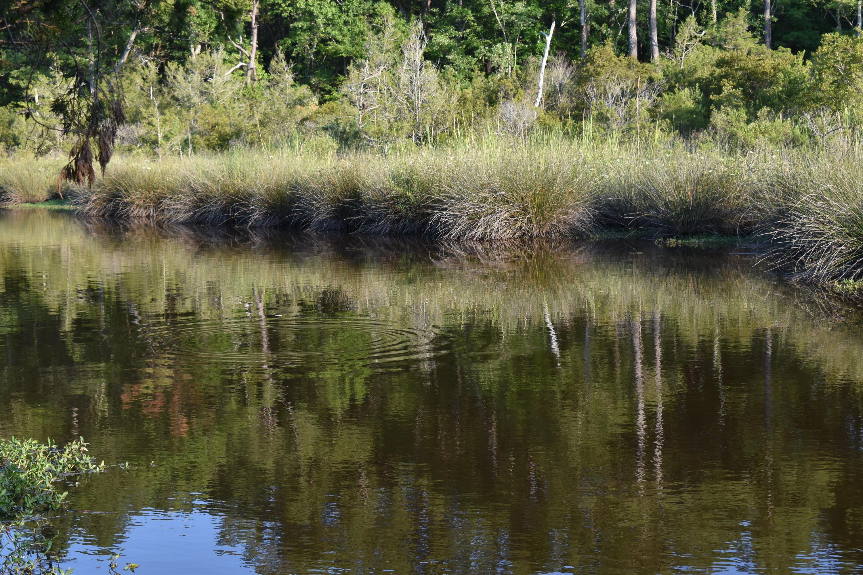 29 Osprey Watch Lane, Oriental, North Carolina 28571, ,Residential land,For sale,Osprey Watch,100174498