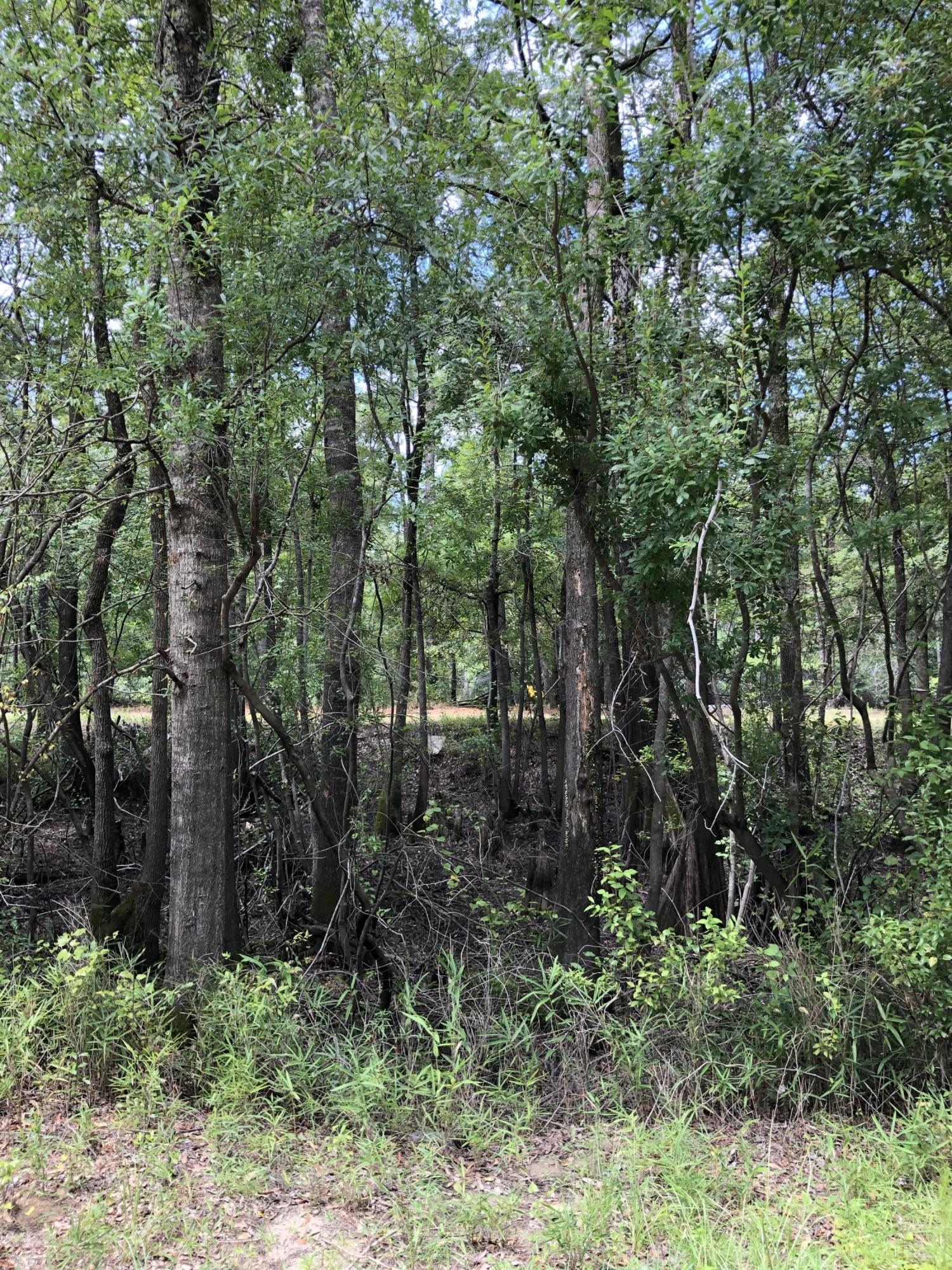 5 Beaver Trail, Burgaw, North Carolina 28425, ,Undeveloped,For sale,Beaver,100177032
