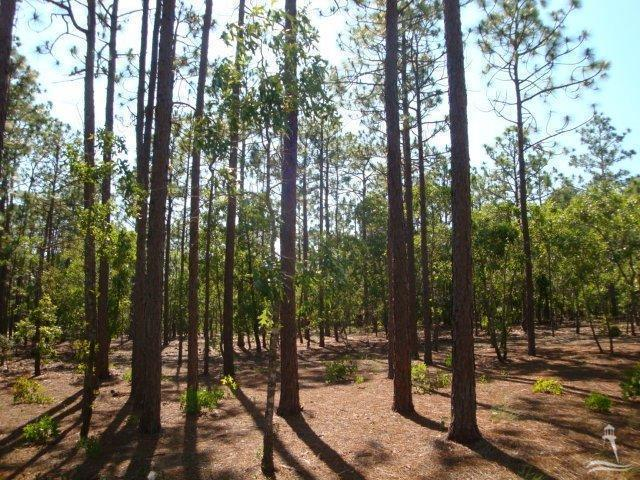 2711 Shady Pine Circle, Southport, North Carolina 28461, ,Residential land,For sale,Shady Pine,100204231