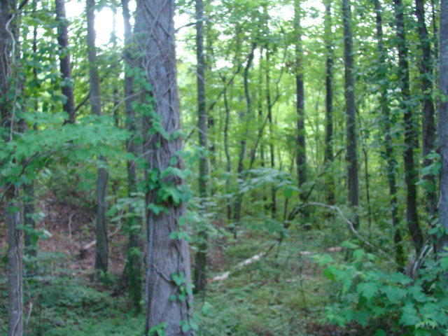 Lot 8 River Road, Blounts Creek, North Carolina 27814, ,Residential land,For sale,River,100209537