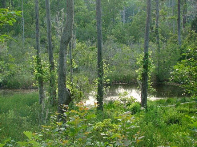 Lot 8 River Road, Blounts Creek, North Carolina 27814, ,Residential land,For sale,River,100209537