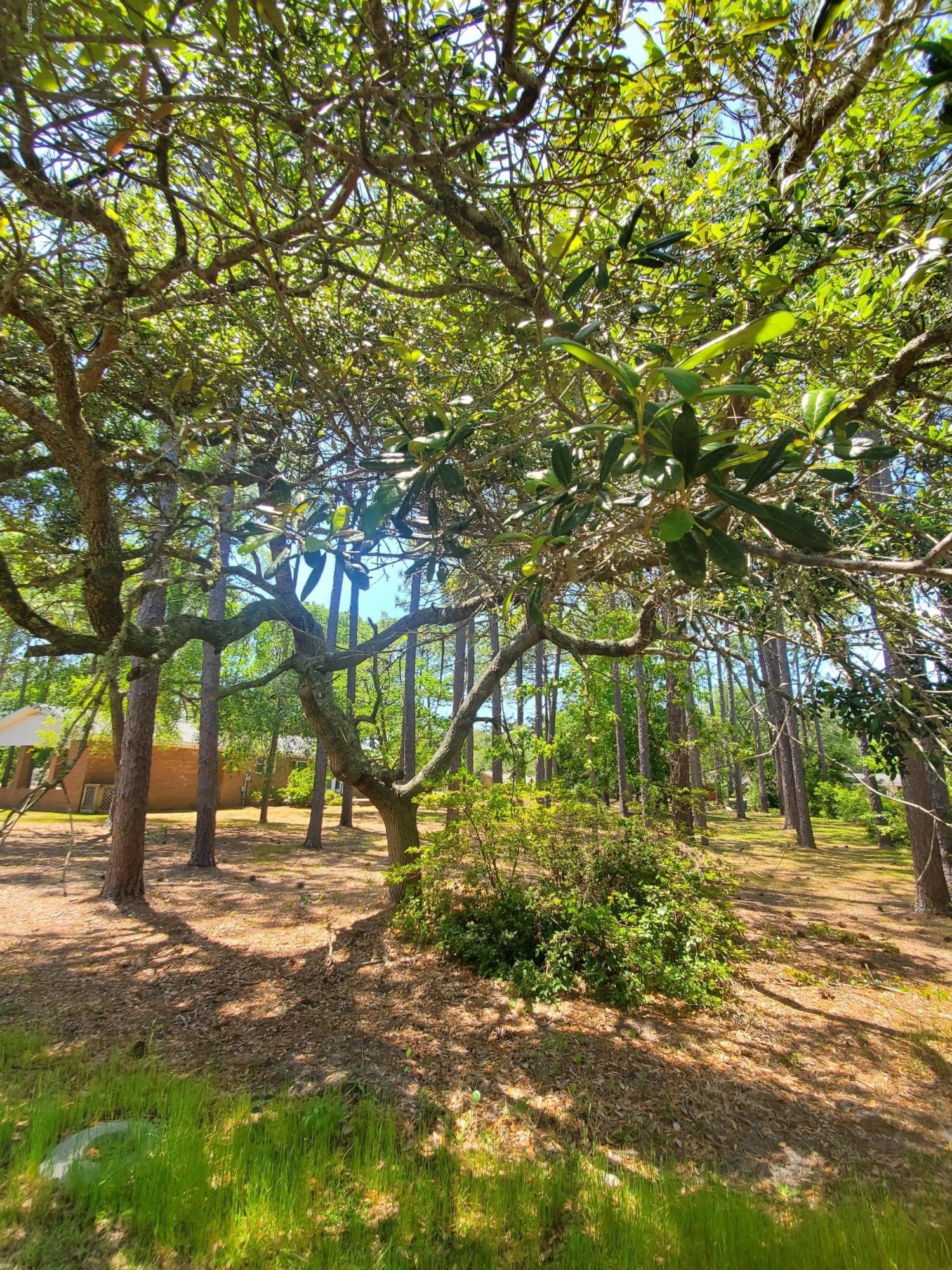 1203 Moore Street, Southport, North Carolina 28461, ,Residential land,For sale,Moore,100213956