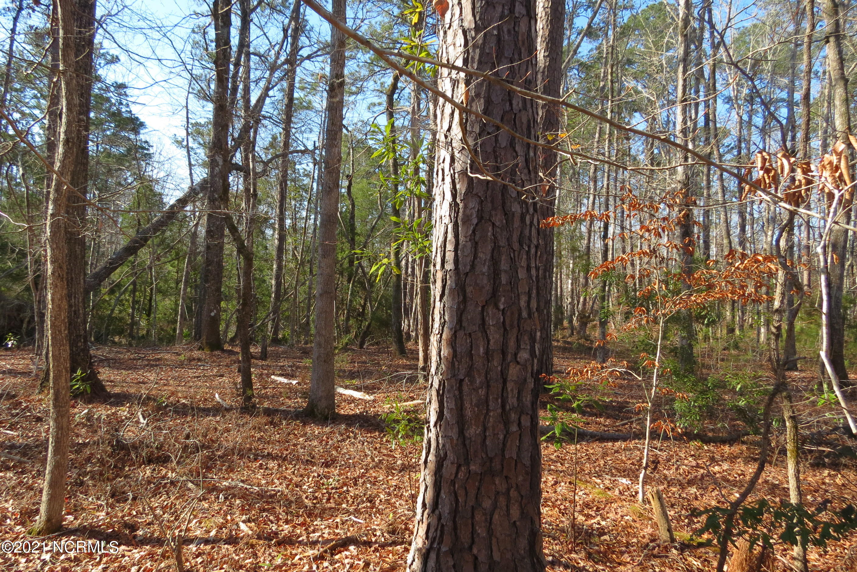 98 Winding Creek Drive, Oriental, North Carolina 28571, ,Residential land,For sale,Winding Creek,100259444
