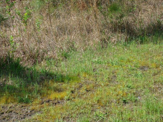 Lot 65 Eagle Trace Drive, Blounts Creek, North Carolina 27814, ,Residential land,For sale,Eagle Trace,100261781