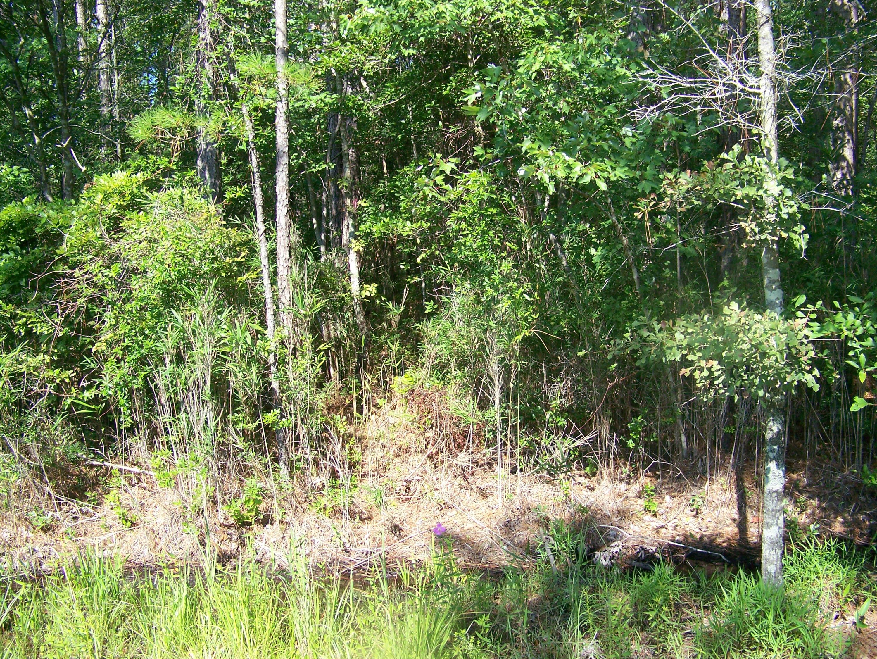 380 Sparrow Road, Boiling Spring Lakes, North Carolina 28461, ,Mobile home lot,For sale,Sparrow,100267386