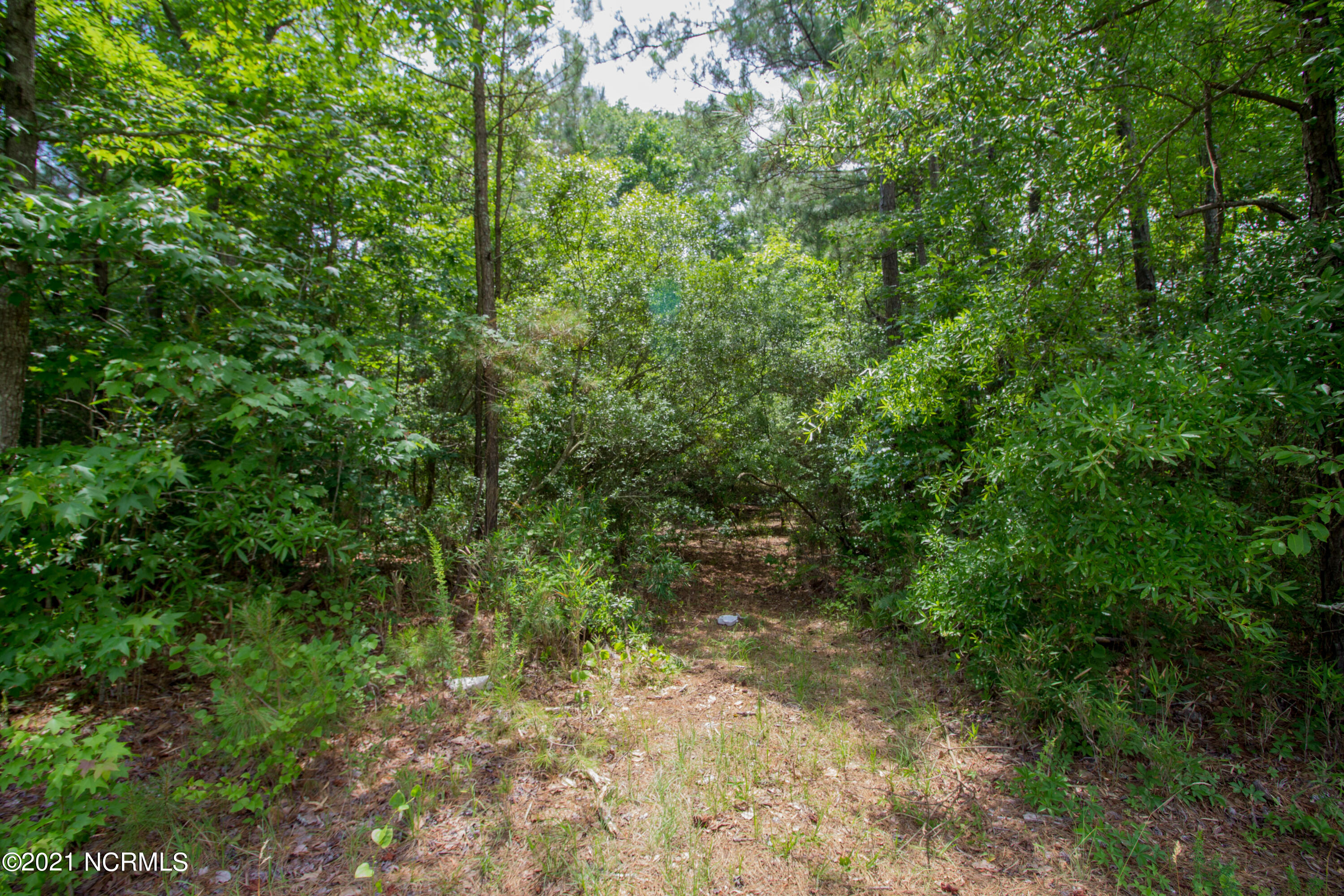 77 Wheat Patch Road, Bath, North Carolina 27808, ,Residential land,For sale,Wheat Patch,100275251