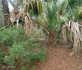 8 Needlerush Court, Bald Head Island, North Carolina 28461, ,Residential land,For sale,Needlerush,100285860