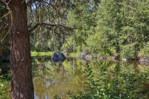7-18-Pond-1500x1000-72dpi