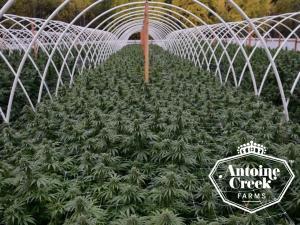 Antoine Creek Farms Introduction