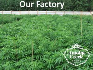 Antoine Creek Farms Branding