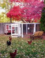 chicken coop summer