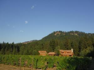 Idyllic private vineyard