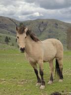 Little\'s Horse