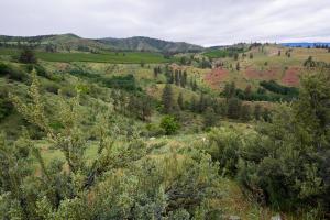 Bear Mountain- Parcel