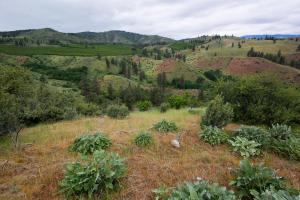 Bear Mountain-Parcel