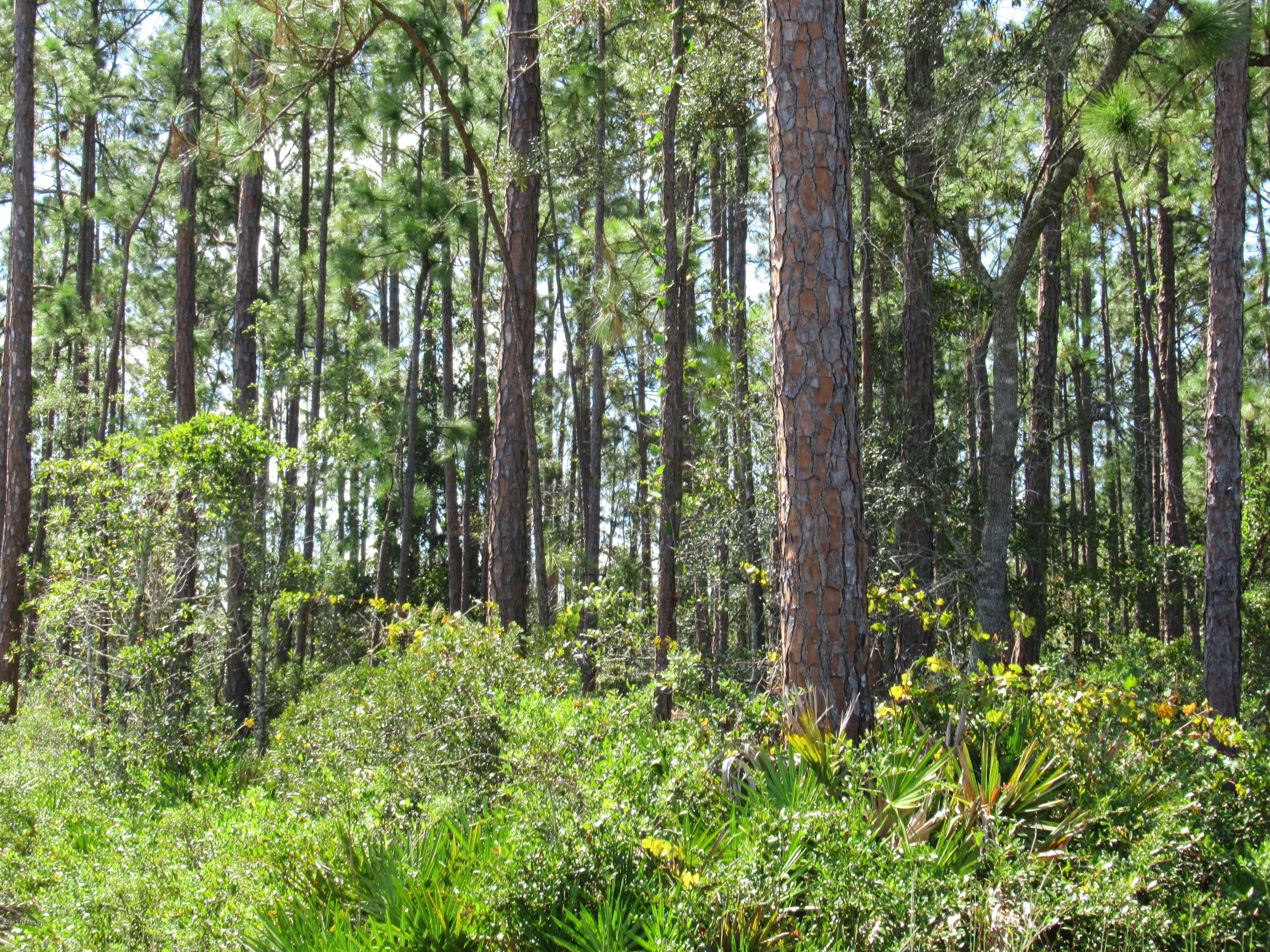 4411 COUNTY ROAD 218, MIDDLEBURG, FLORIDA 32068, ,Vacant land,For sale,COUNTY ROAD 218,900823
