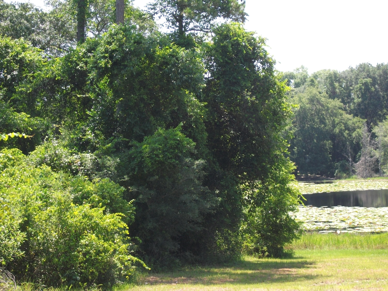 802 HAWTHORNE, HAWTHORNE, FLORIDA 32640, ,Vacant land,For sale,HAWTHORNE,997720