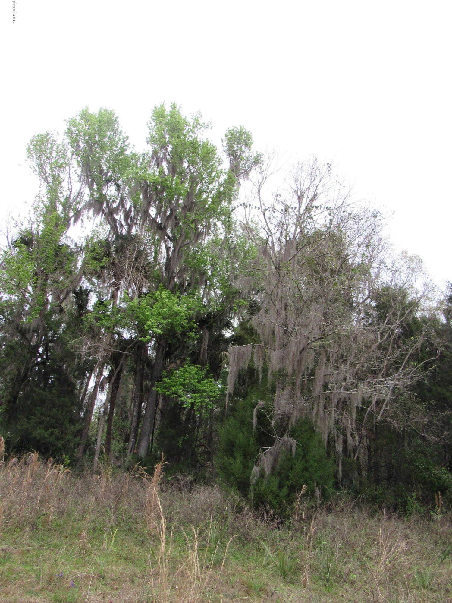 000 COUNTY ROAD 309, GEORGETOWN, FLORIDA 32139, ,Vacant land,For sale,COUNTY ROAD 309,1039163