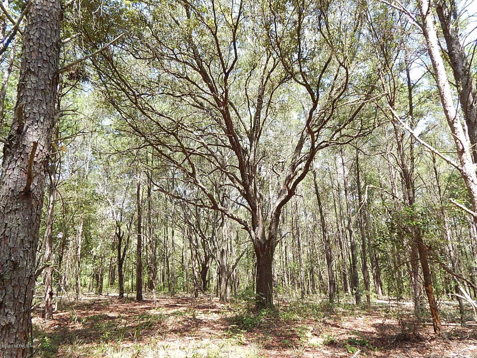 0 ORANGE TREE, POMONA PARK, FLORIDA 32181, ,Vacant land,For sale,ORANGE TREE,1060320