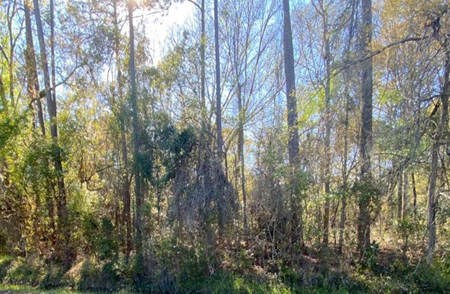 0 OAK, STARKE, FLORIDA 32091, ,Vacant land,For sale,OAK,1104432