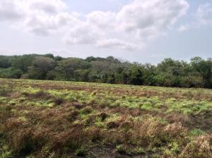 Terreno En Venta En Pacora, Cerro Azul, Panama, PA RAH: 15-353