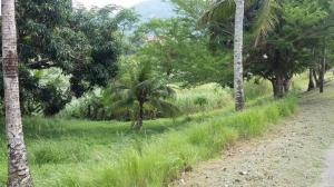 Terreno En Venta En Panama, Las Cumbres, Panama, PA RAH: 15-2014
