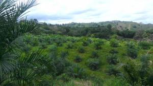 Terreno En Ventaen Chiriqui, Chiriqui, Panama, PA RAH: 15-2427