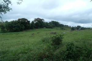 Terreno En Venta En Chiriqui, Chiriqui, Panama, PA RAH: 15-2704