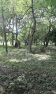 Terreno En Venta En Panama Oeste, Capira, Panama, PA RAH: 15-2953