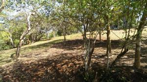 Terreno En Venta En Chame, Sora, Panama, PA RAH: 16-420