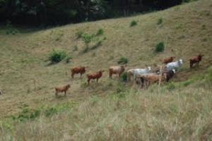Terreno En Ventaen La Chorrera, Chorrera, Panama, PA RAH: 16-695