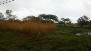 Terreno En Venta En Chame, Coronado, Panama, PA RAH: 16-1789