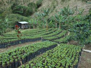 Terreno En Ventaen Chiriqui, Chiriqui, Panama, PA RAH: 16-2069