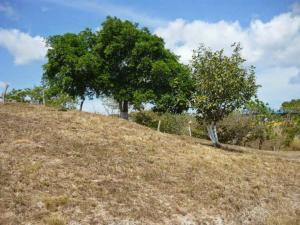 Terreno En Ventaen Cocle, Cocle, Panama, PA RAH: 16-2235