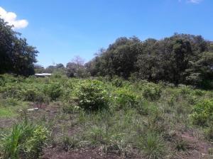 Terreno En Venta En Chame, Gorgona, Panama, PA RAH: 16-2390