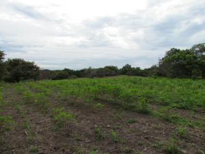Terreno En Venta En Chame, Gorgona, Panama, PA RAH: 16-2443