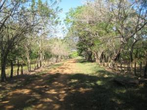 Terreno En Ventaen Chiriqui, Chiriqui, Panama, PA RAH: 16-2228