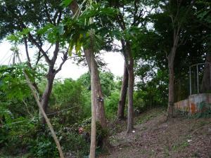Terreno En Ventaen Rio Hato, Playa Blanca, Panama, PA RAH: 16-4051