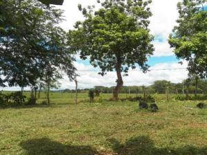 Terreno En Venta En David, Porton, Panama, PA RAH: 16-4551