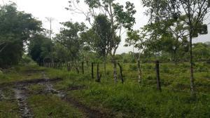 Terreno En Venta En David, Porton, Panama, PA RAH: 17-241