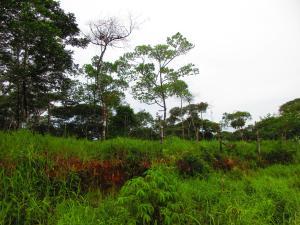 Terreno En Venta En Pacora, Cerro Azul, Panama, PA RAH: 17-4272