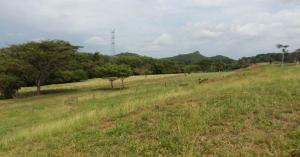 Terreno En Ventaen La Chorrera, Chorrera, Panama, PA RAH: 17-5564