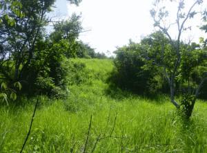 Terreno En Alquileren Chame, Gorgona, Panama, PA RAH: 17-6219