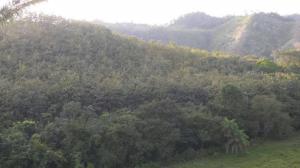 Terreno En Alquileren Darien, Darien, Panama, PA RAH: 18-312