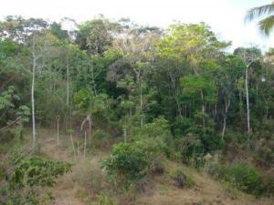Terreno En Ventaen Colón, Gatun, Panama, PA RAH: 18-986