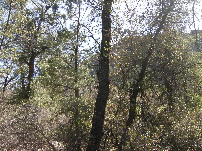 0 Flower Pot Ranch Rd Camp Verde, AZ 86322 - MLS #: 1009337