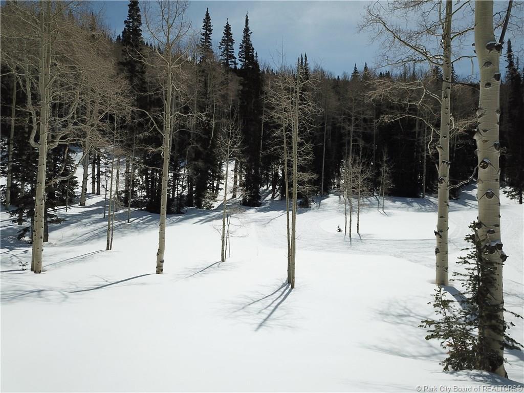 273  White Pine Canyon Road