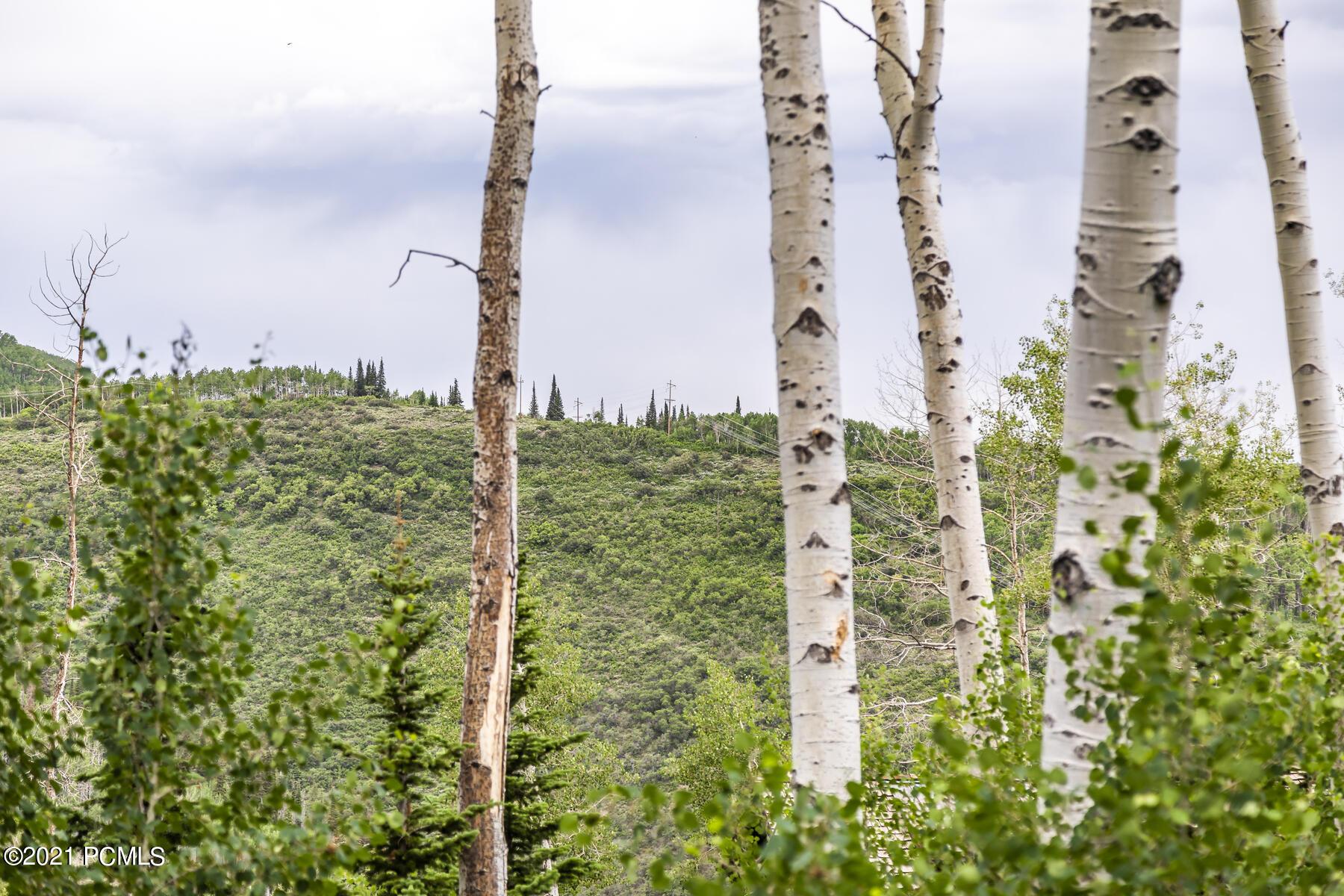 49  Silver Strike Trail